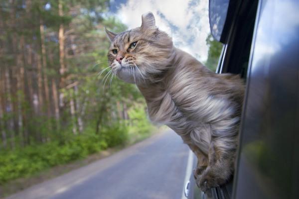 Котешкото движение